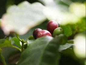 2012年11月6日コーヒー.jpg